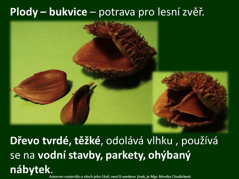 Plody – bukvice – potrava pro lesní zvěř.