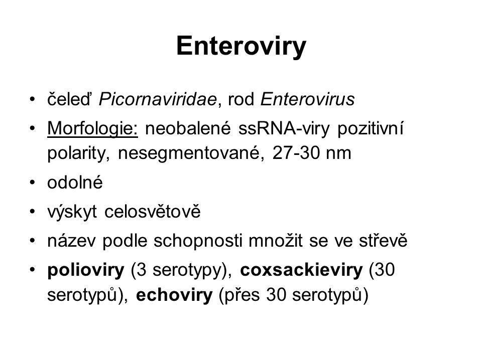Enteroviry čeleď Picornaviridae, rod Enterovirus