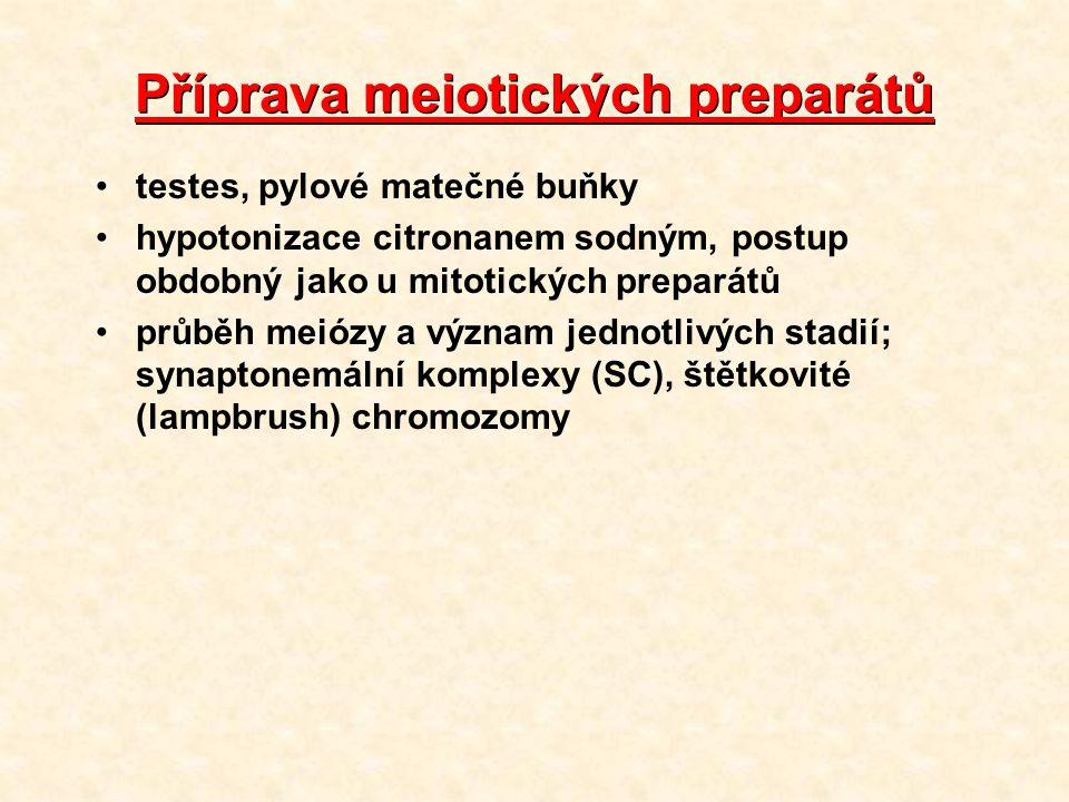 Příprava meiotických preparátů