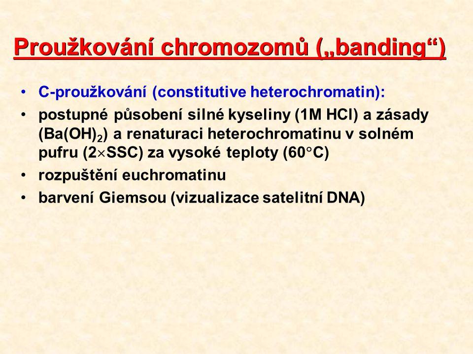 """Proužkování chromozomů (""""banding )"""