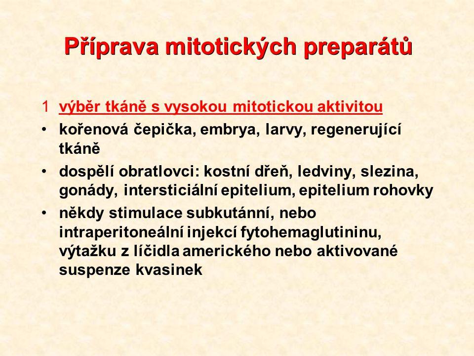 Příprava mitotických preparátů