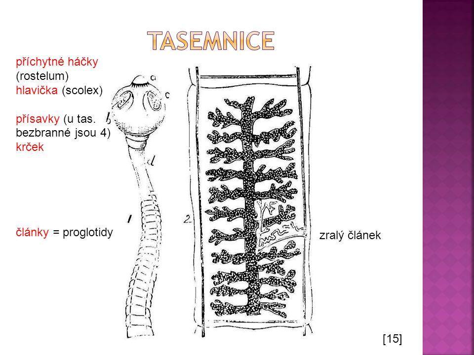 tasemnice příchytné háčky (rostelum) hlavička (scolex)