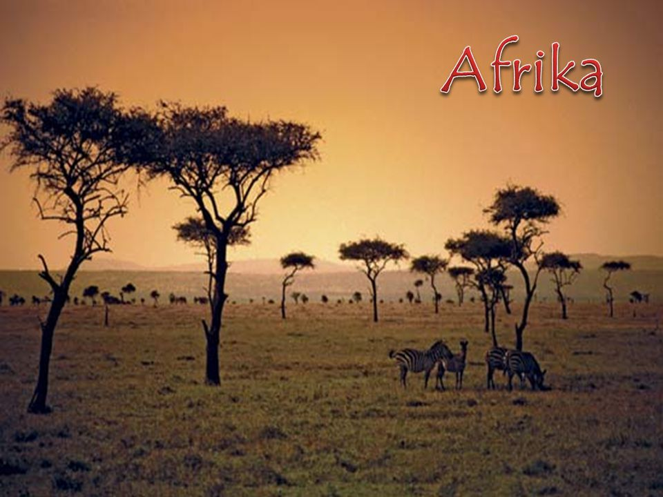 Afrika http://room42.wikispaces.com/Savanna+Geography