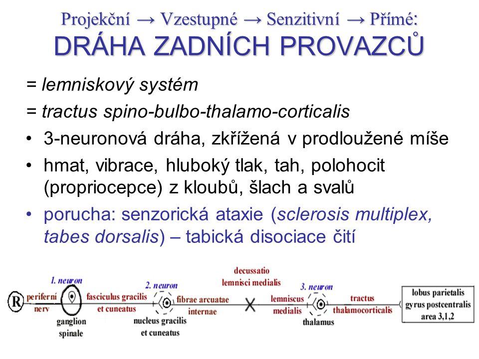 Projekční → Vzestupné → Senzitivní → Přímé: DRÁHA ZADNÍCH PROVAZCŮ
