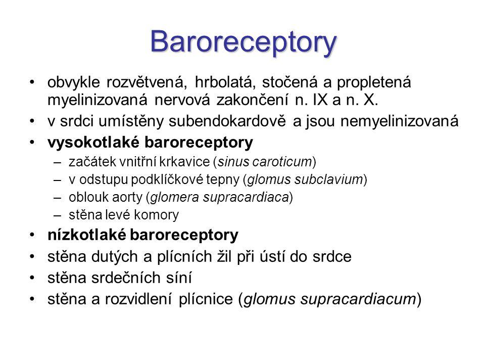 Baroreceptory obvykle rozvětvená, hrbolatá, stočená a propletená myelinizovaná nervová zakončení n. IX a n. X.