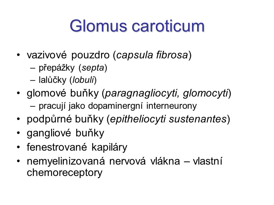 Glomus caroticum vazivové pouzdro (capsula fibrosa)
