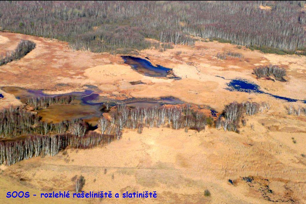 SOOS - rozlehlé rašeliniště a slatiniště