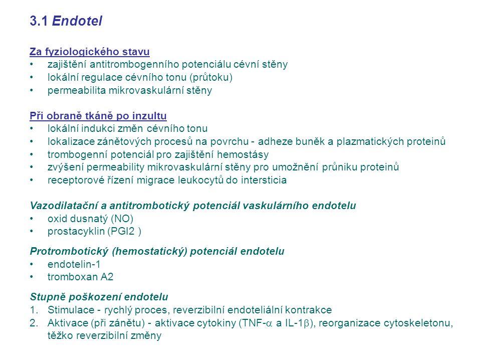 3.1 Endotel Za fyziologického stavu