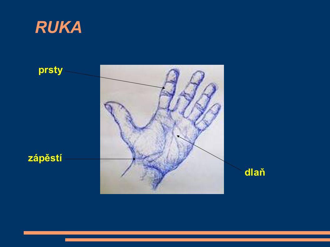 RUKA prsty zápěstí dlaň
