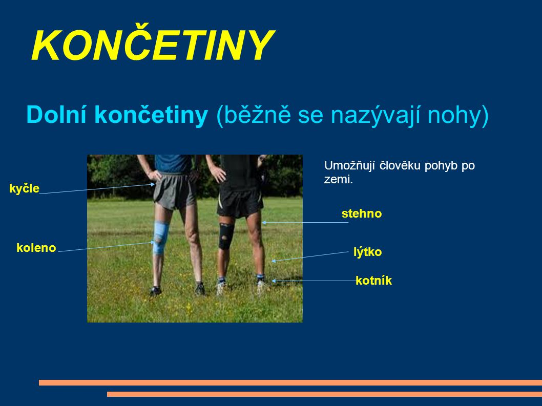 KONČETINY Dolní končetiny (běžně se nazývají nohy)