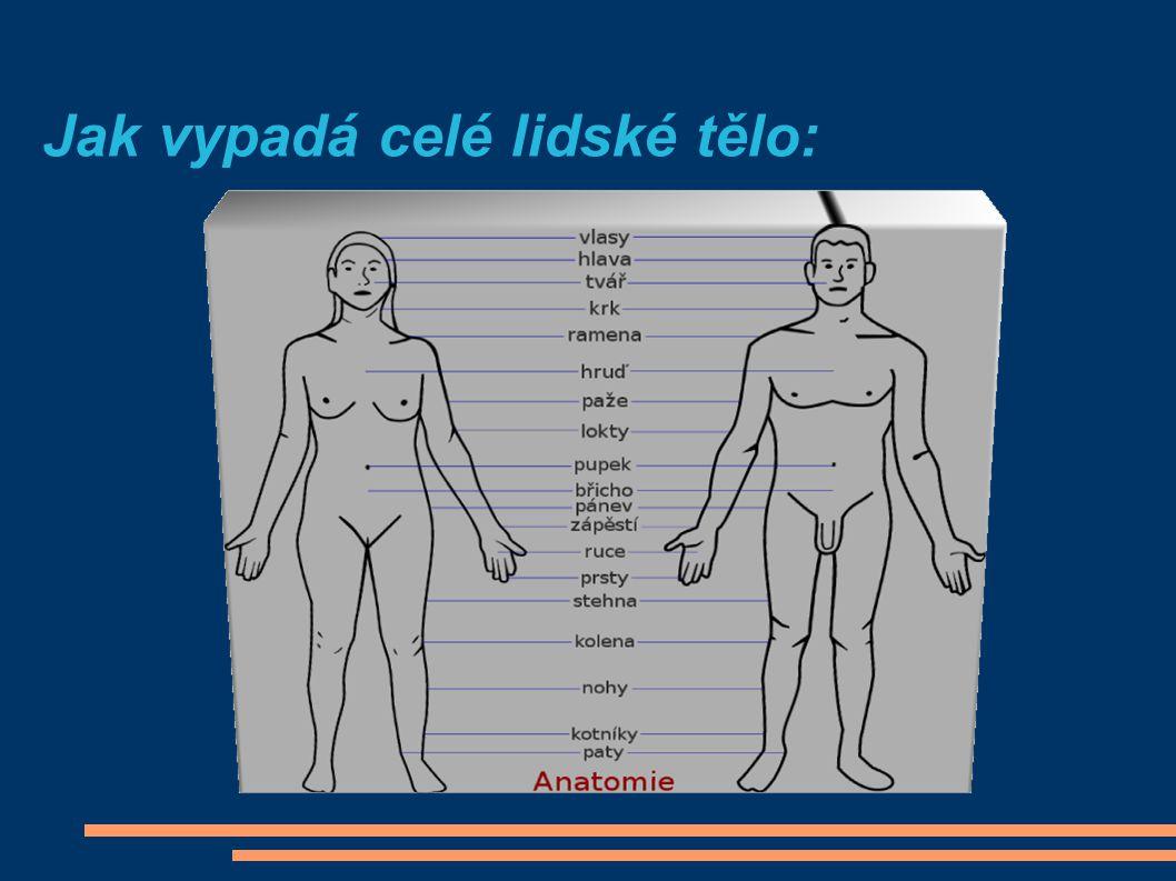 Jak vypadá celé lidské tělo: