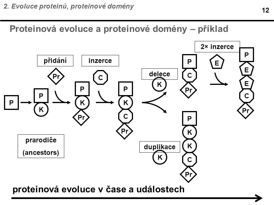 Proteinová evoluce a proteinové domény – příklad