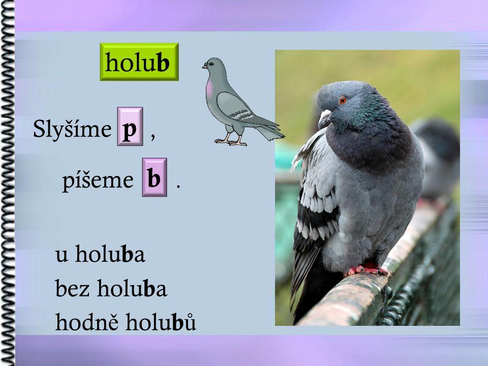 holub p Slyšíme , píšeme . b u holuba bez holuba hodně holubů