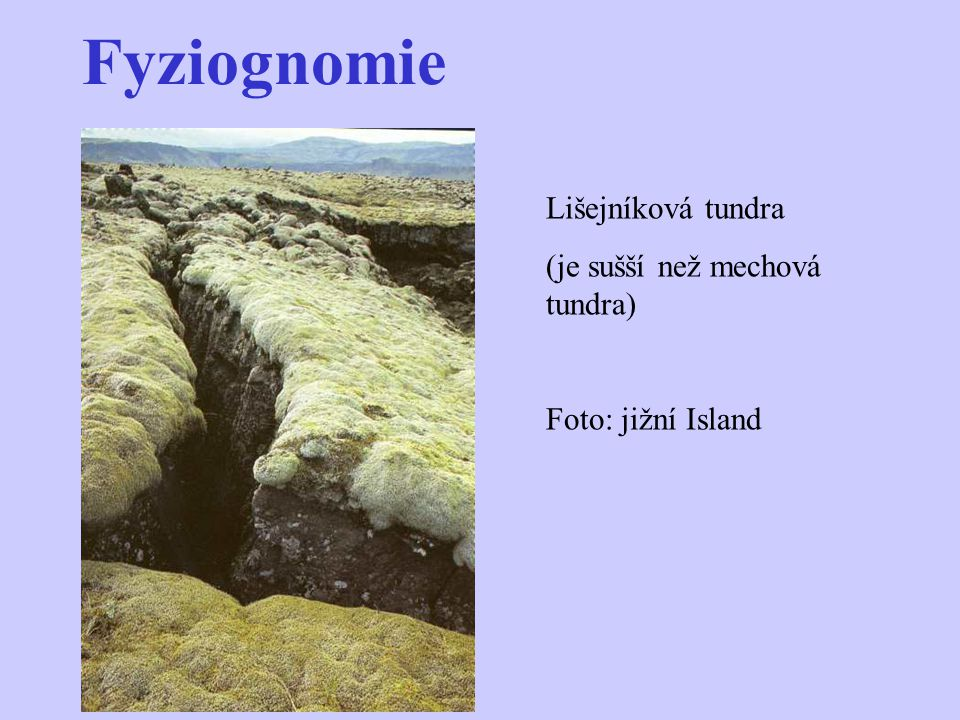 Fyziognomie Lišejníková tundra (je sušší než mechová tundra)