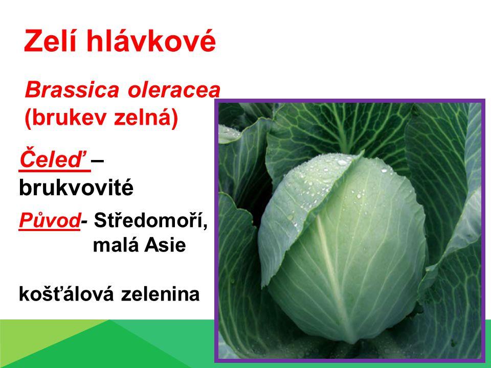 Zelí hlávkové Brassica oleracea (brukev zelná) Čeleď – brukvovité