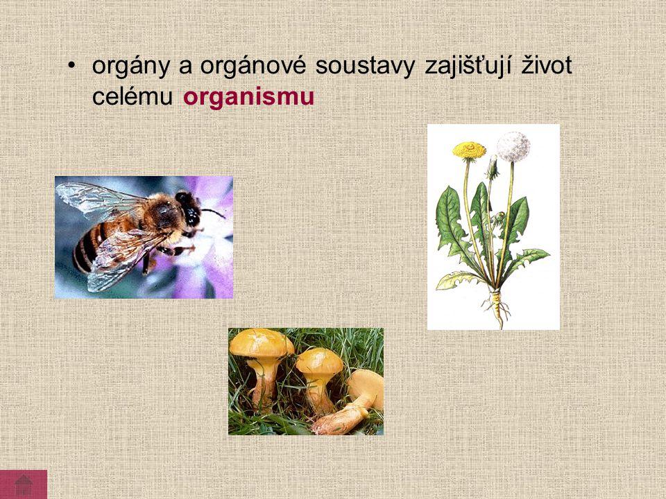 orgány a orgánové soustavy zajišťují život celému organismu