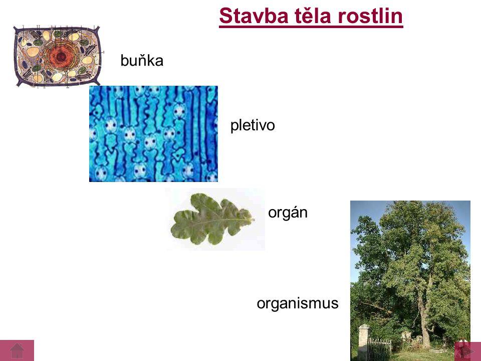 Stavba těla rostlin buňka pletivo orgán organismus