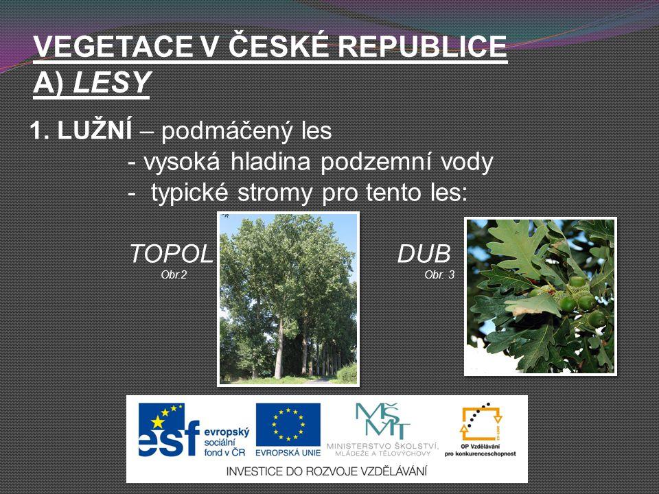 VEGETACE V ČESKÉ REPUBLICE A) LESY