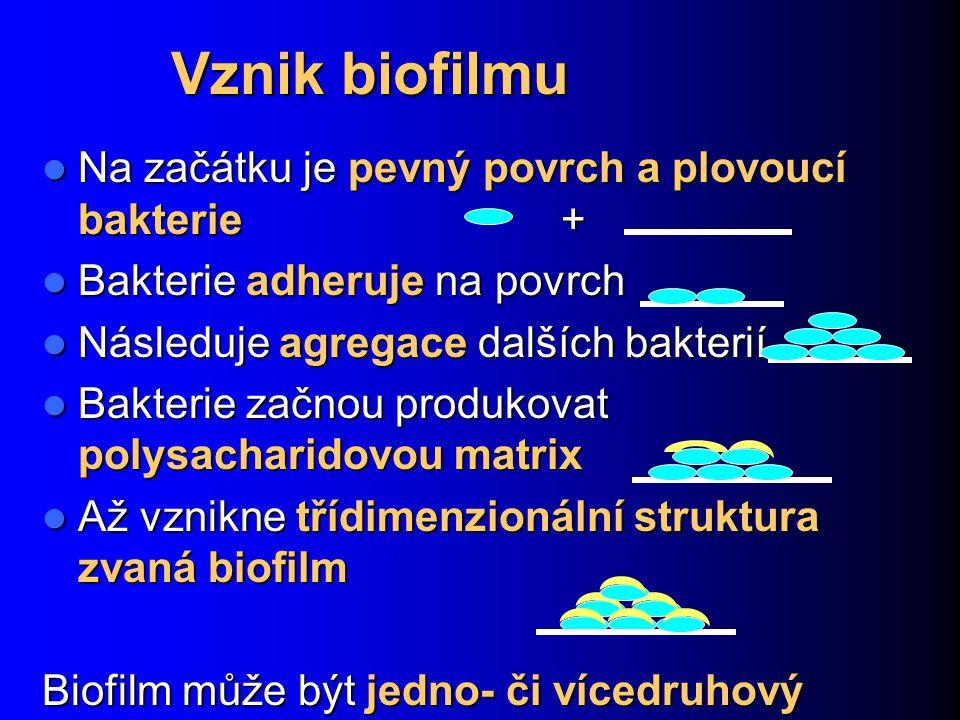 Vznik biofilmu Na začátku je pevný povrch a plovoucí bakterie +