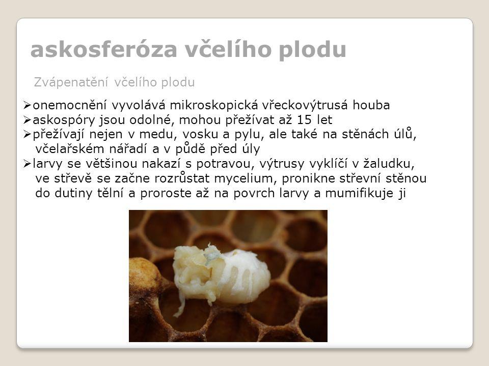 askosferóza včelího plodu