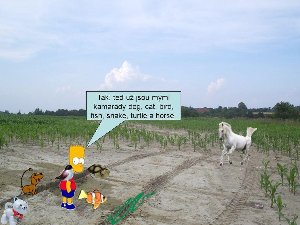 Tak, teď už jsou mými kamarády dog, cat, bird, fish, snake, turtle a horse.