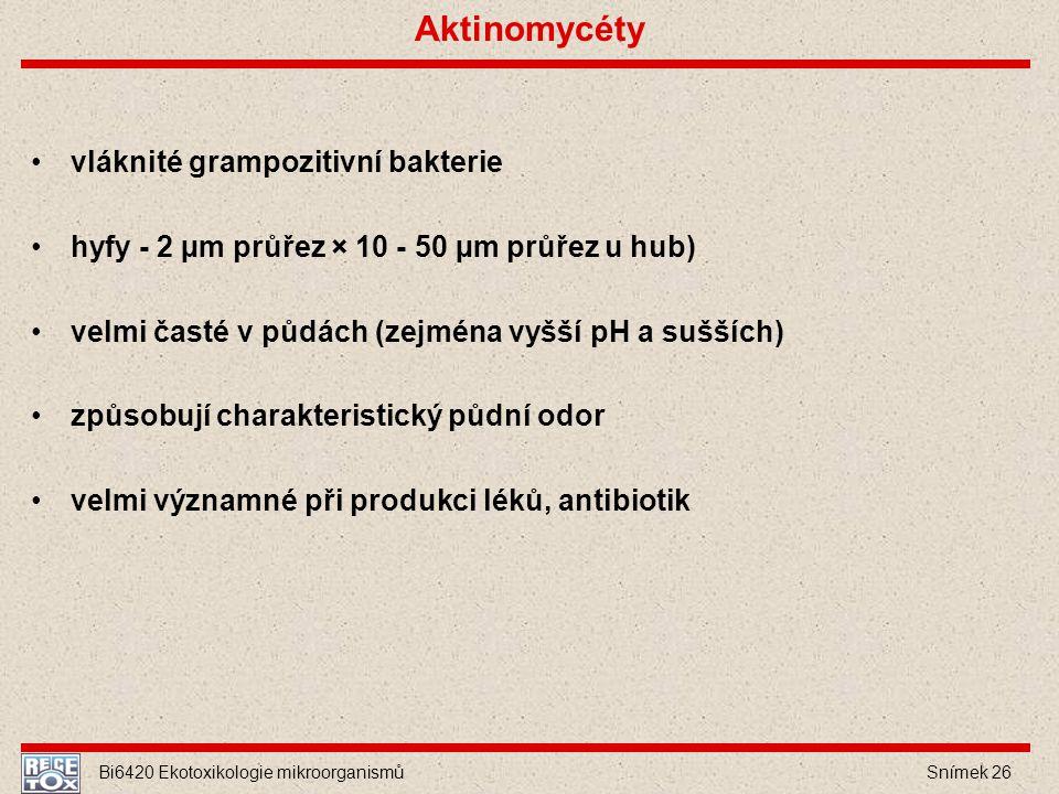 Aktinomycéty vláknité grampozitivní bakterie