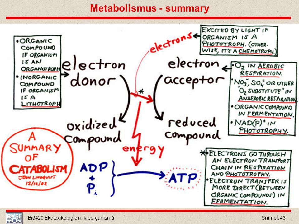 Metabolismus - summary