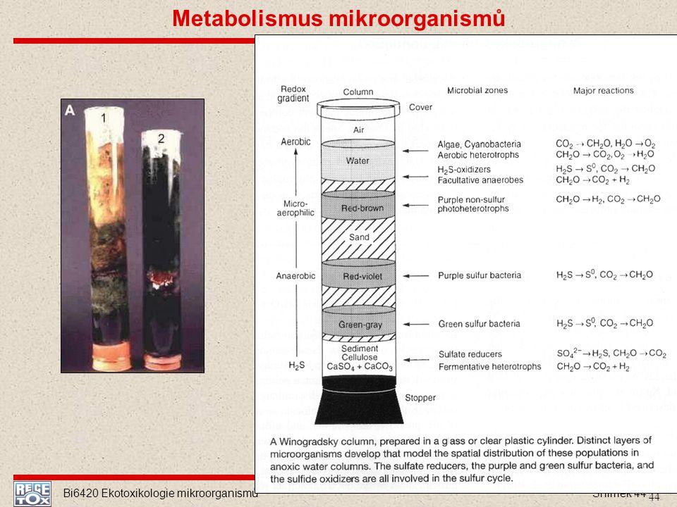 Metabolismus mikroorganismů