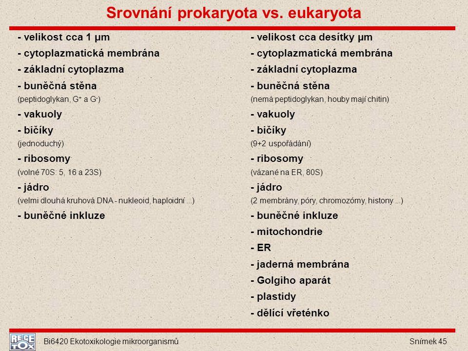 Srovnání prokaryota vs. eukaryota