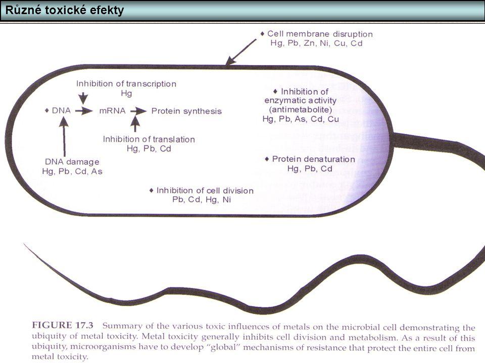 Různé toxické efekty Působení toxických látek - příklad těžké kovy