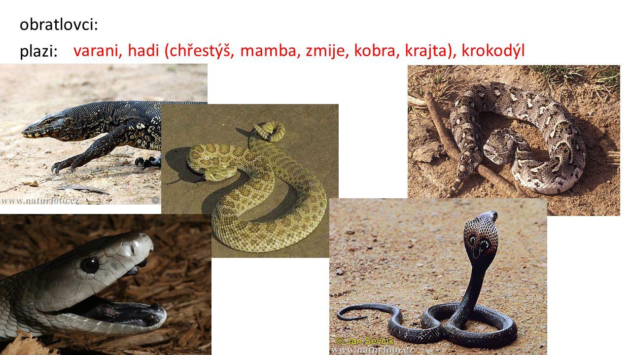 obratlovci: plazi: varani, hadi (chřestýš, mamba, zmije, kobra, krajta), krokodýl