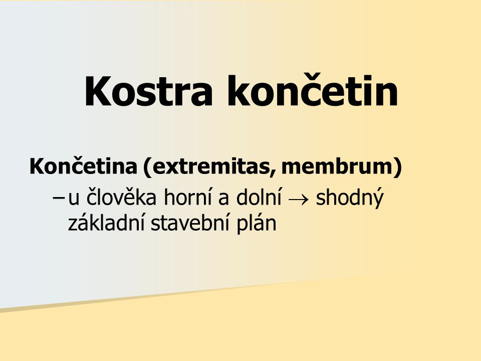 Kostra končetin Končetina (extremitas, membrum)