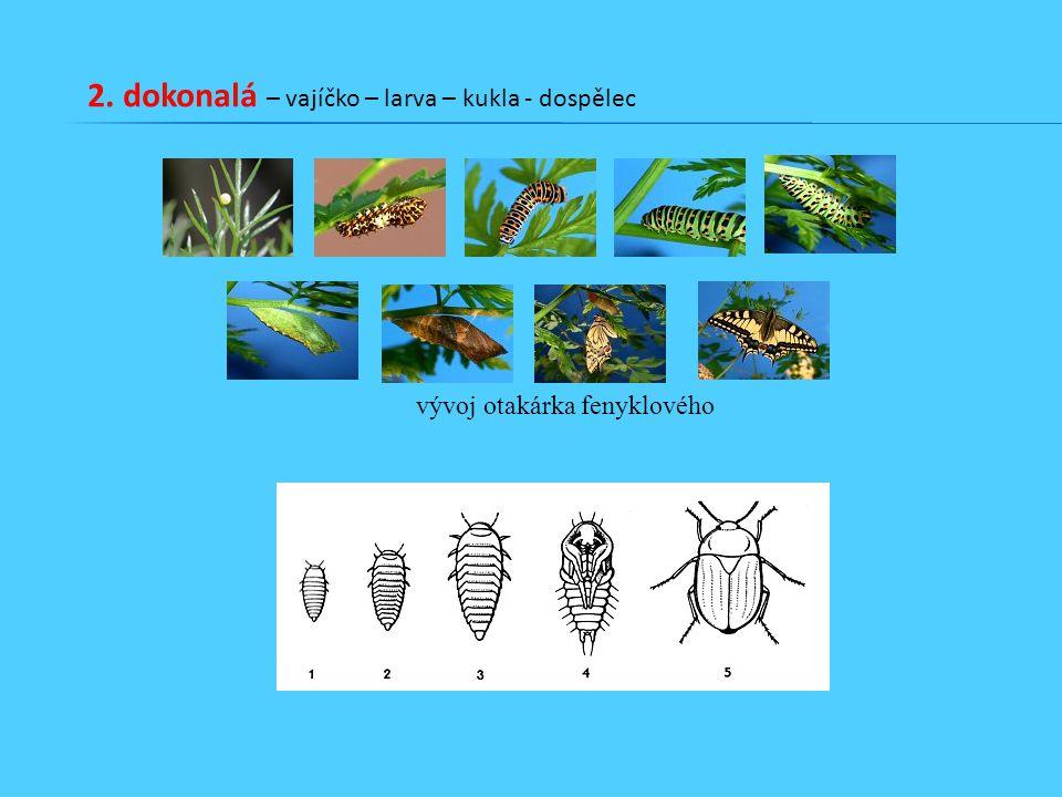 2. dokonalá – vajíčko – larva – kukla - dospělec