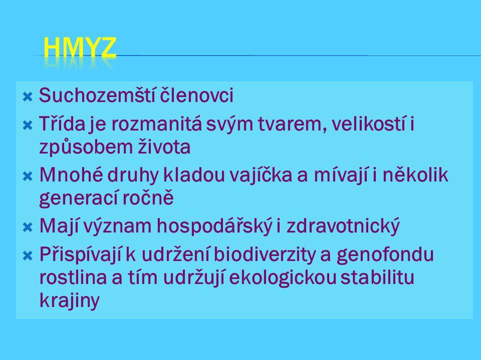 HMYZ Suchozemští členovci