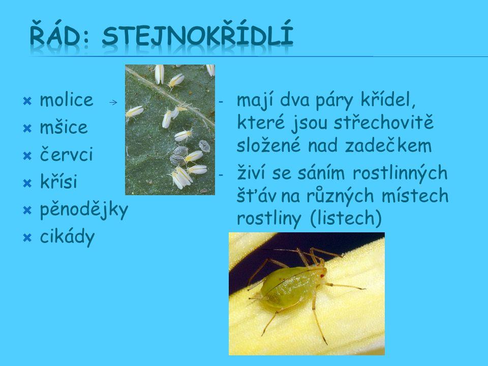 Řád: Stejnokřídlí molice mšice červci křísi pěnodějky cikády