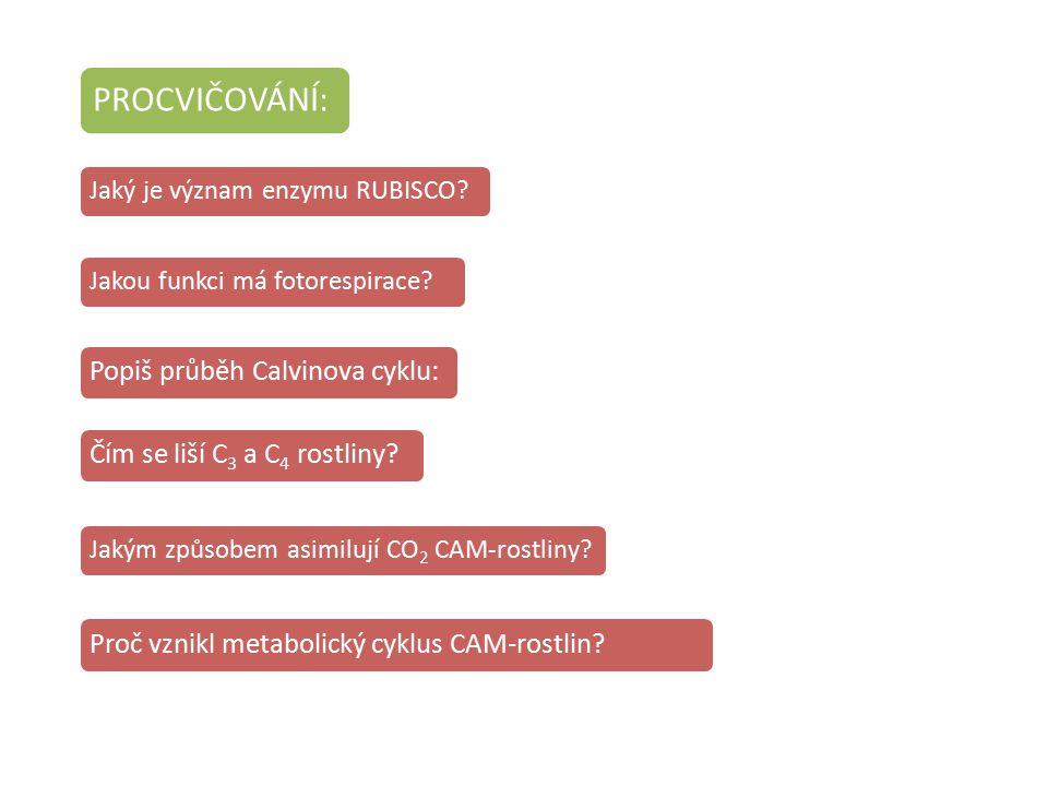 Proč vznikl metabolický cyklus CAM-rostlin