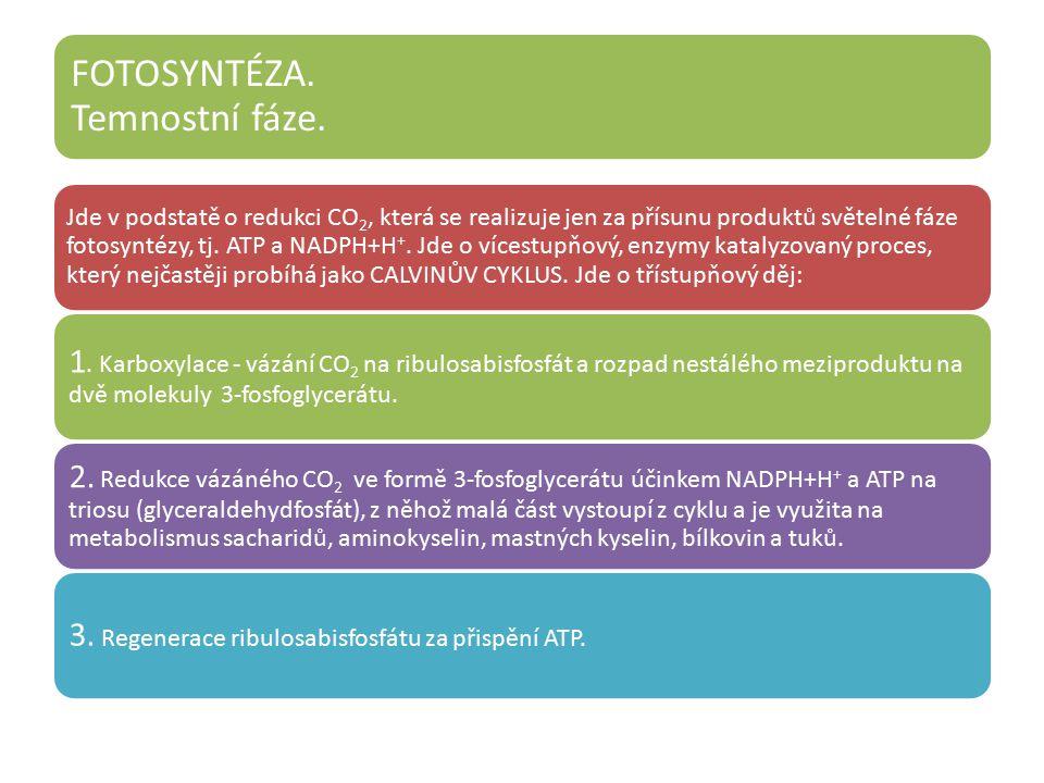 3. Regenerace ribulosabisfosfátu za přispění ATP.