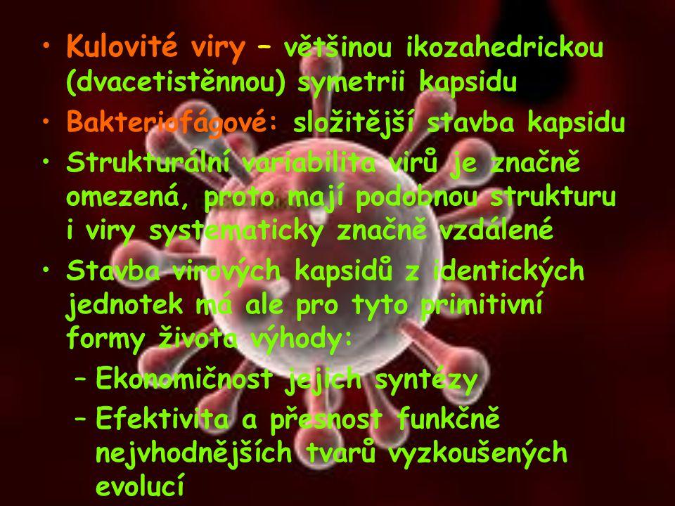 Kulovité viry – většinou ikozahedrickou (dvacetistěnnou) symetrii kapsidu