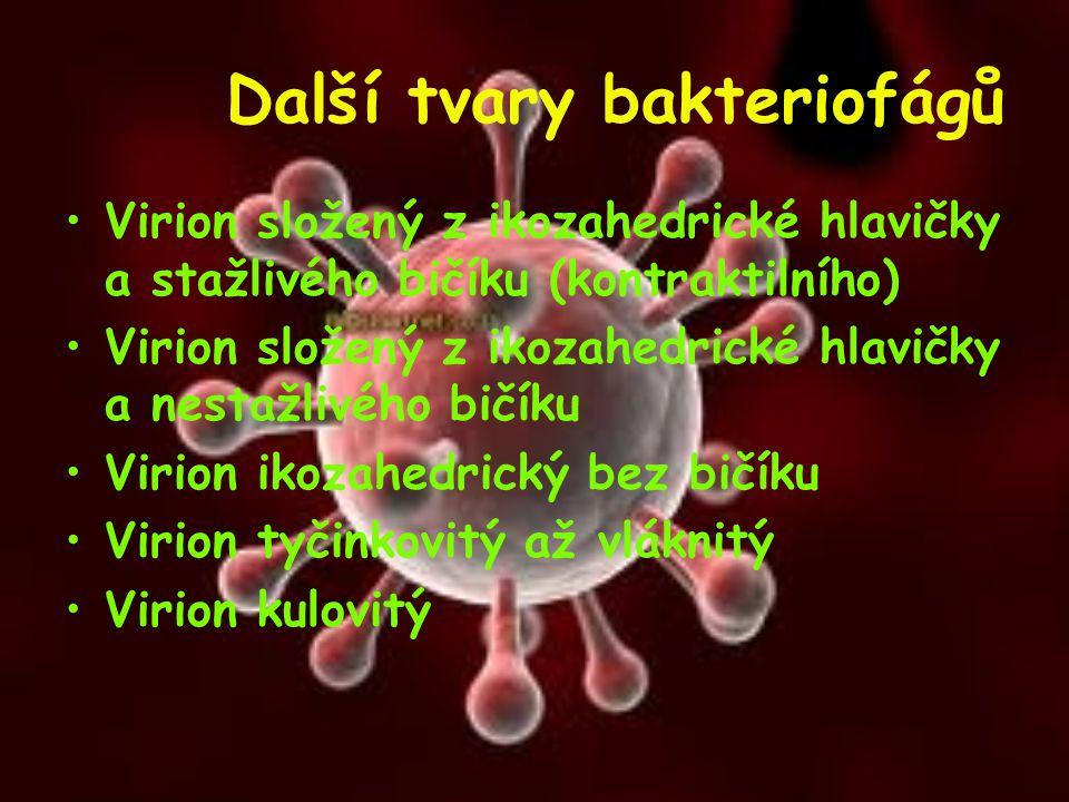 Další tvary bakteriofágů