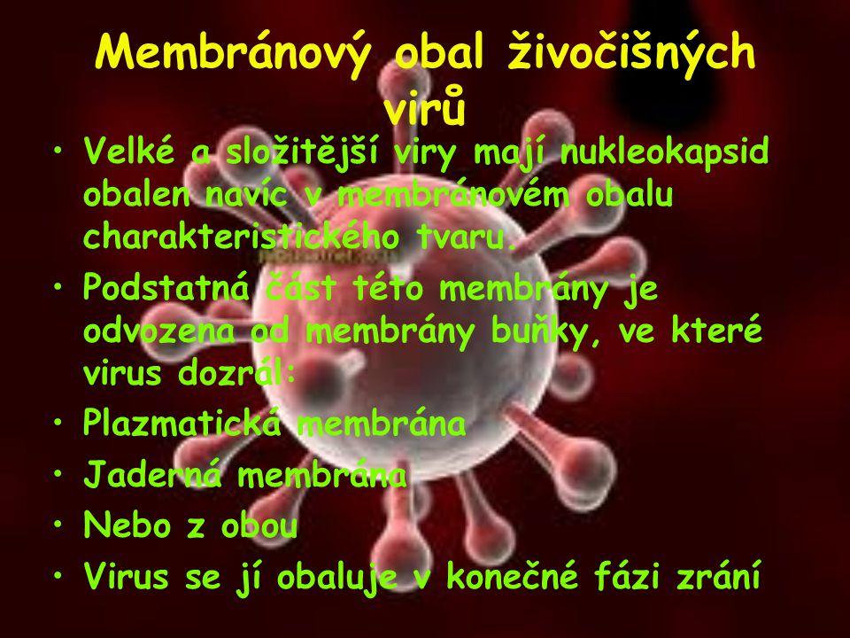 Membránový obal živočišných virů