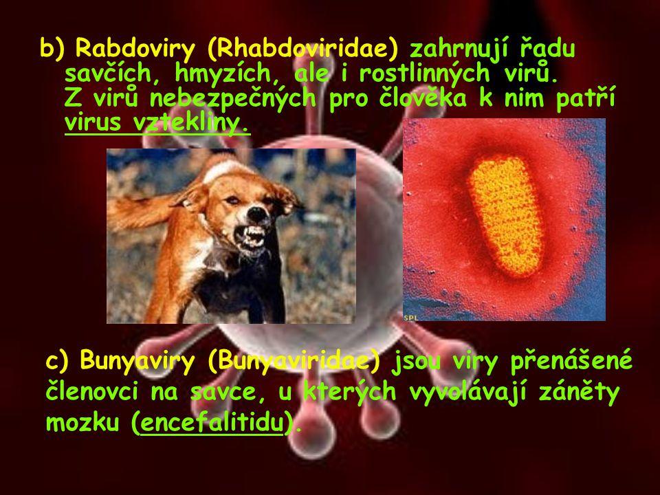 b) Rabdoviry (Rhabdoviridae) zahrnují řadu savčích, hmyzích, ale i rostlinných virů. Z virů nebezpečných pro člověka k nim patří virus vztekliny.