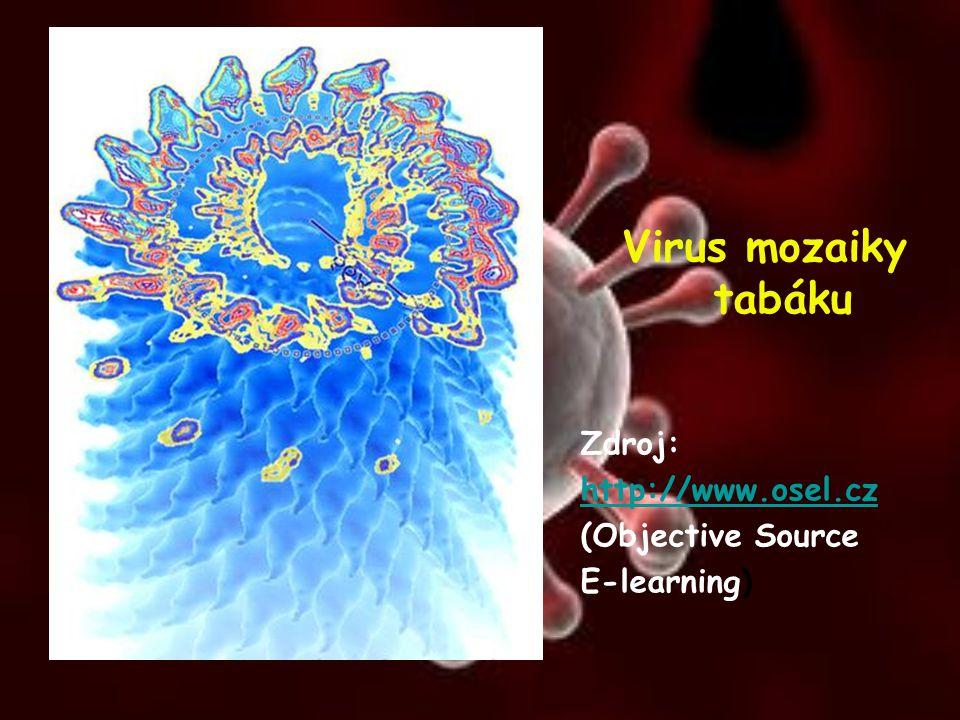 Virus mozaiky tabáku Zdroj: http://www.osel.cz (Objective Source