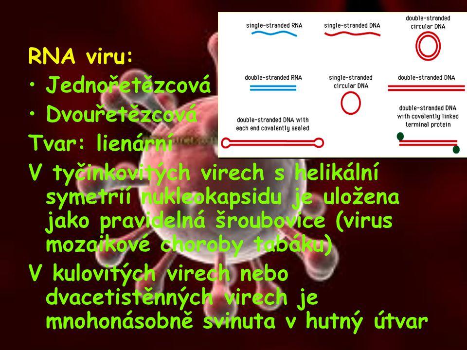 RNA viru: Jednořetězcová. Dvouřetězcová. Tvar: lienární.