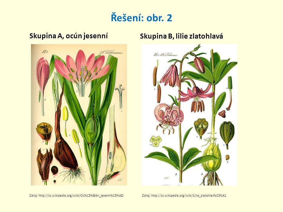 Řešení: obr. 2 Skupina A, ocún jesenní Skupina B, lilie zlatohlavá