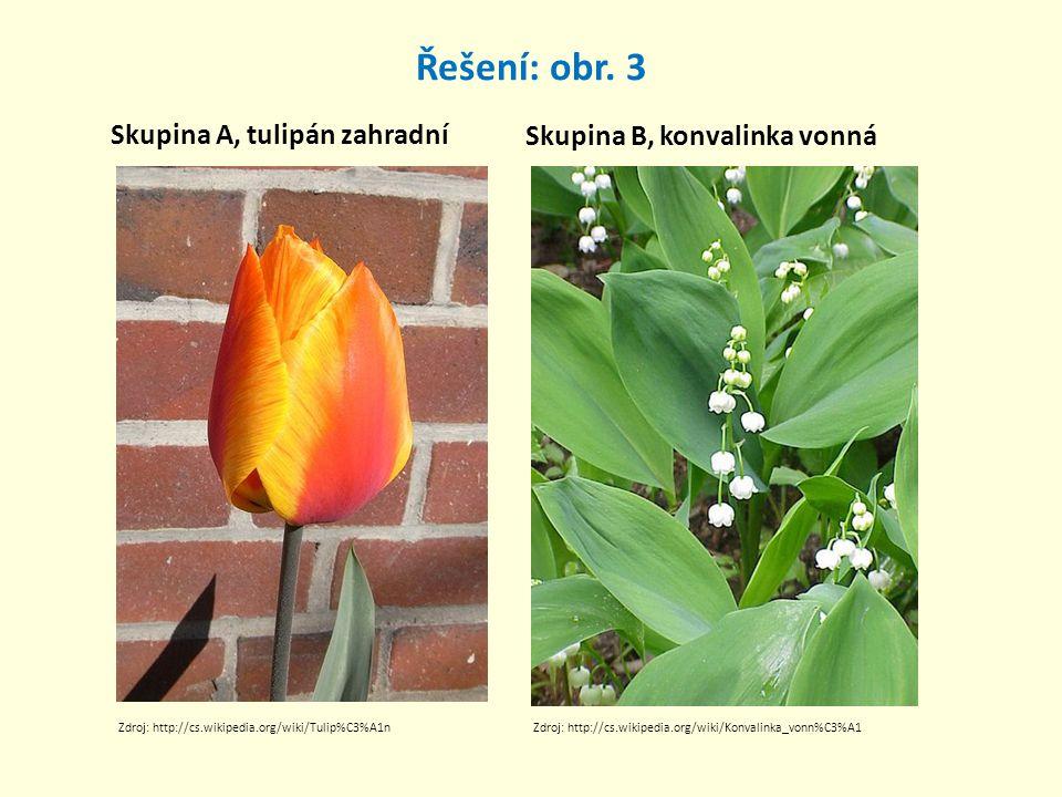Řešení: obr. 3 Skupina A, tulipán zahradní Skupina B, konvalinka vonná