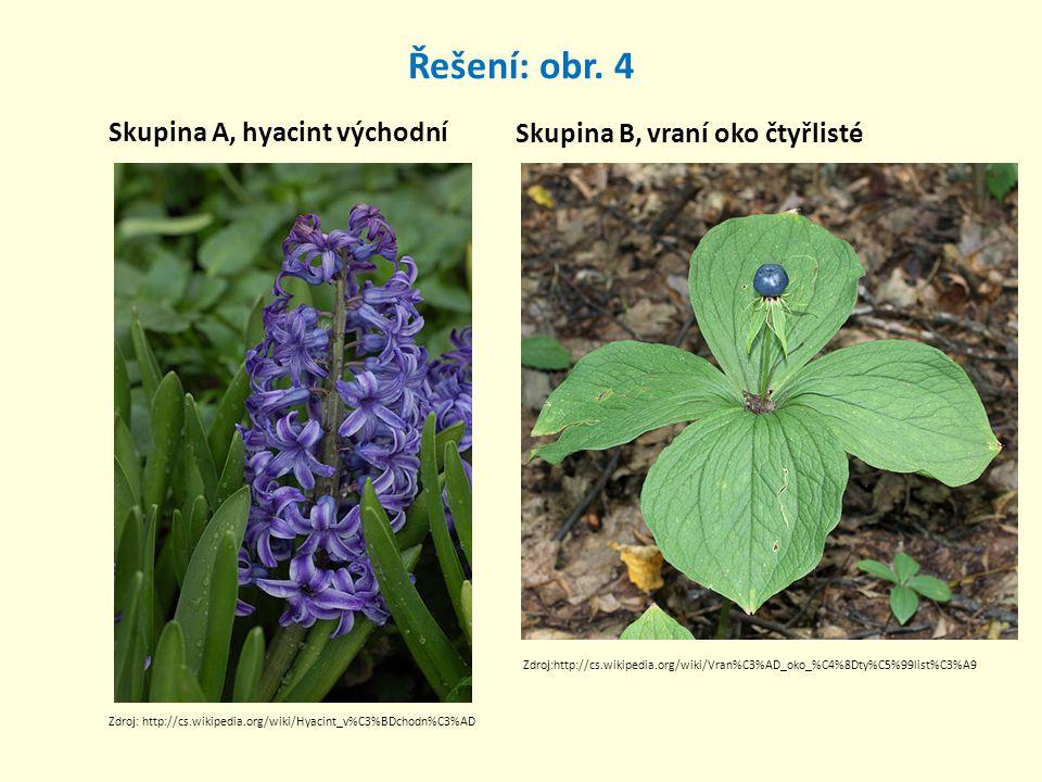 Řešení: obr. 4 Skupina A, hyacint východní