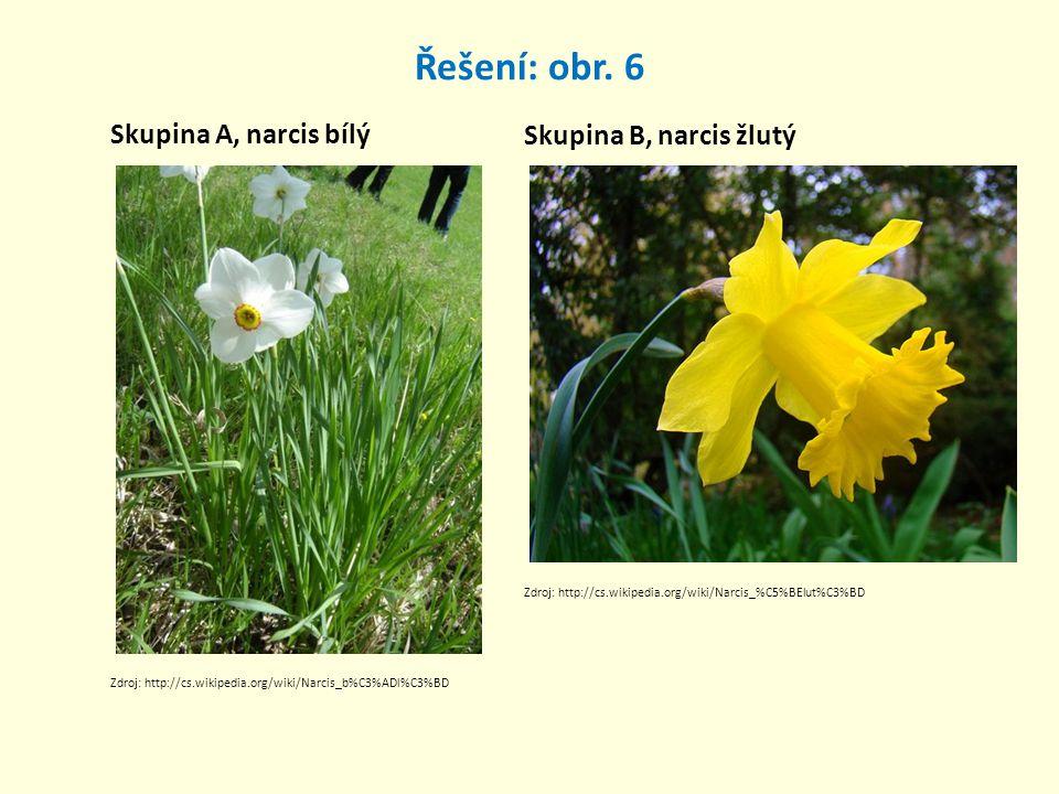 Řešení: obr. 6 Skupina A, narcis bílý Skupina B, narcis žlutý