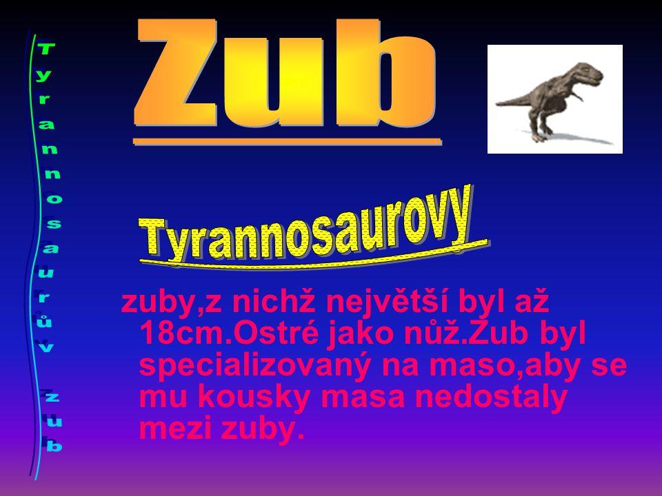Zub Tyrannosaurův zub Tyrannosaurovy . .
