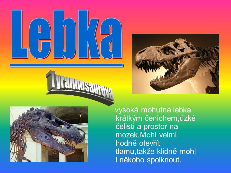 . Lebka. Tyrannosaurova.