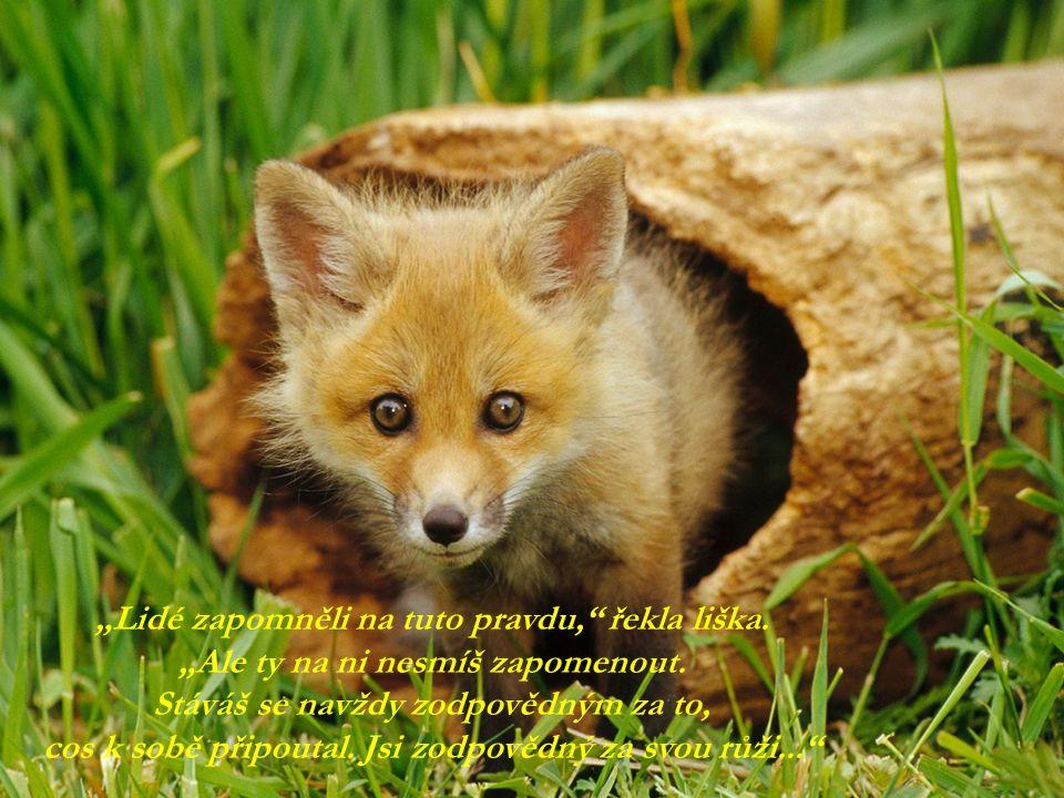 """""""Lidé zapomněli na tuto pravdu, řekla liška."""